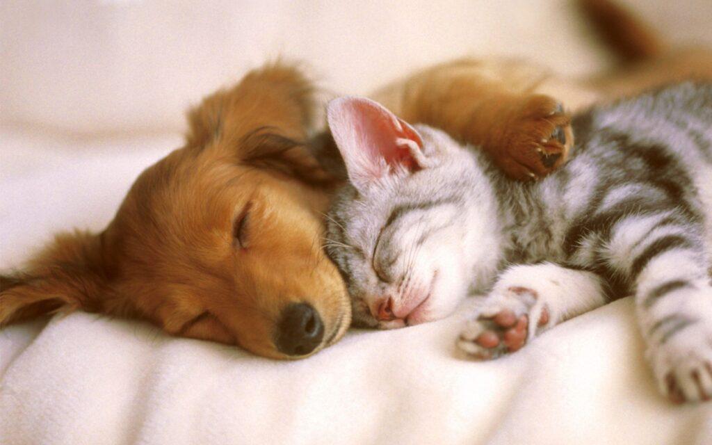 Esiste il Paradiso degli animali domestici?